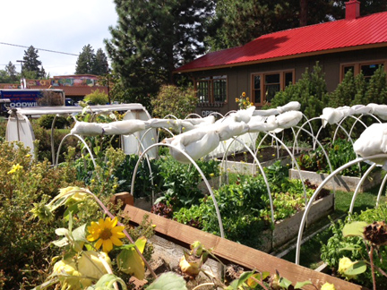 The amazing on-site garden's at Bend's CHOW restaurant.