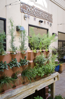 Gorgeous herbs grow in the sunny courtyard at Jackalope.