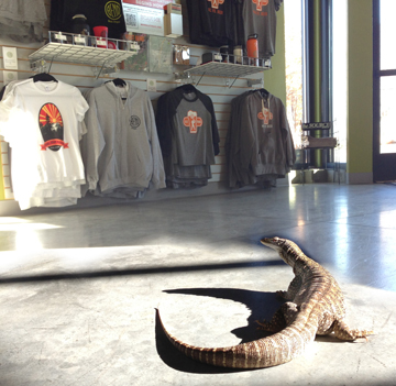 Slick the Australian Sand Monitor was one of dozens of guests at the Bend Visitor Center this week. It appears he enjoys our selection of Bend Ale Trail merchandise.