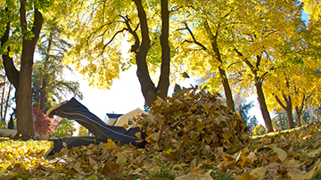 Who's up for some leaf jumping in Drake Park?