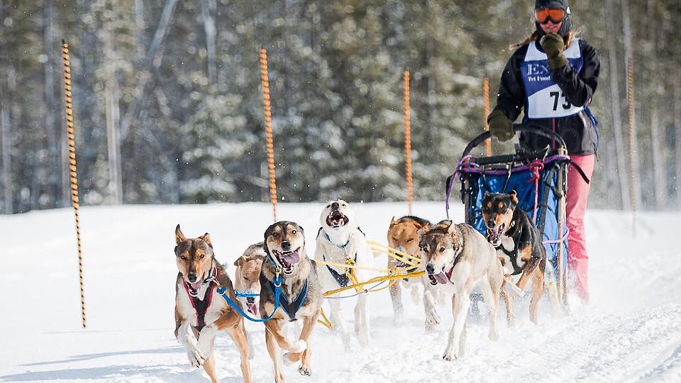 https://www.visitbend.com/wp-content/uploads/2018/04/Bachelor-Butte-Dog-Derby-960.jpg