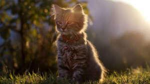 bend-kitty-lodge-960