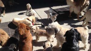 dancin-woofs-doggie-day-care-960