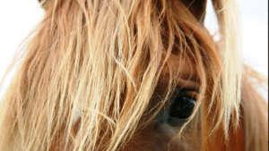 horse-camps-bend-oregon-960