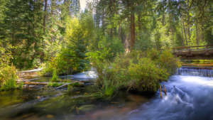 jack-creek-campground-960