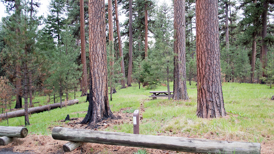 ochoco-divide-campground-960