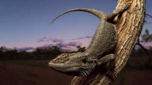 reptile-zone-960