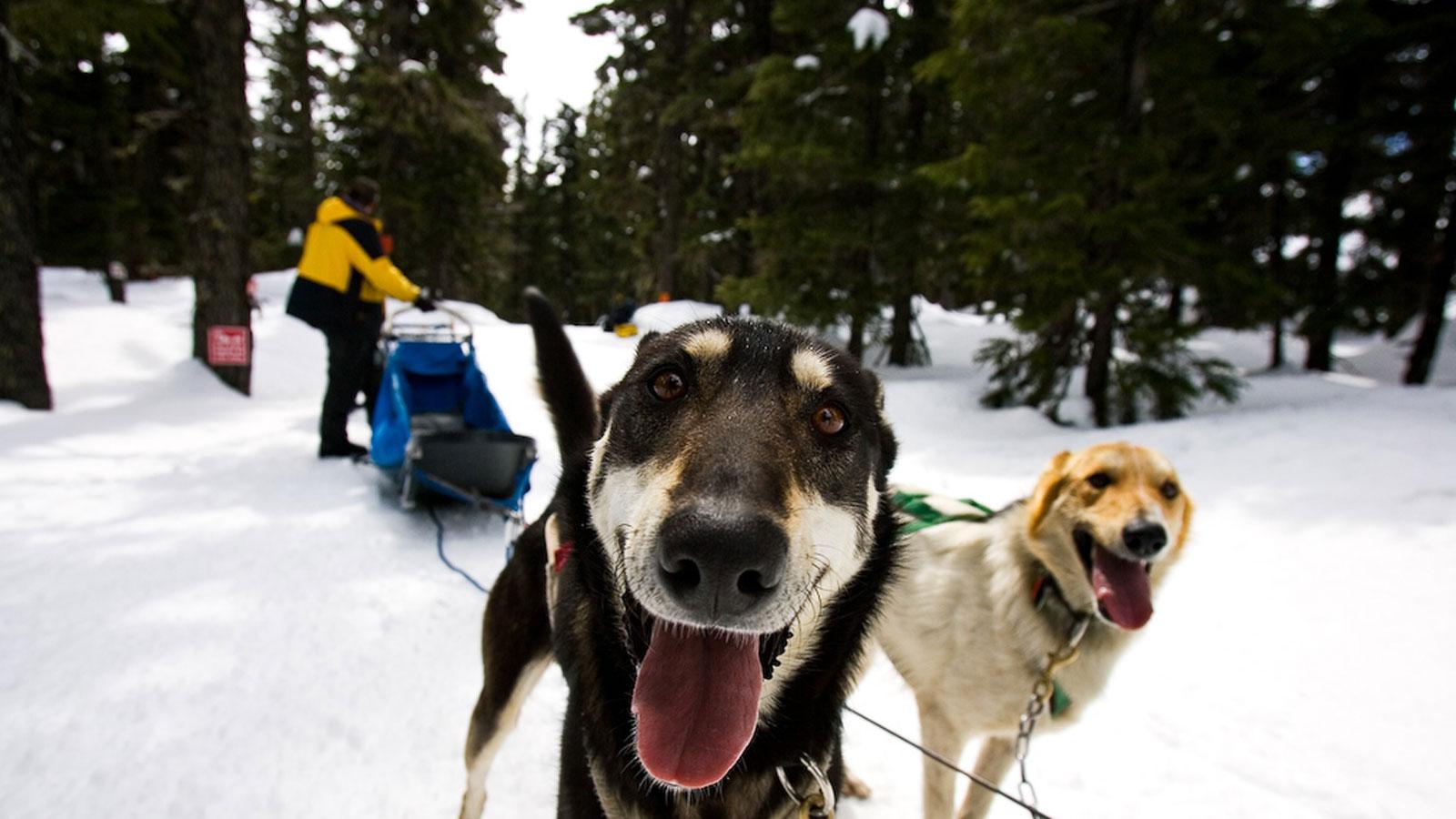 Dog Friendly Rv Parks Oregon