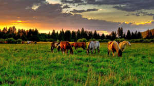 the-bend-equine-medical-center-960