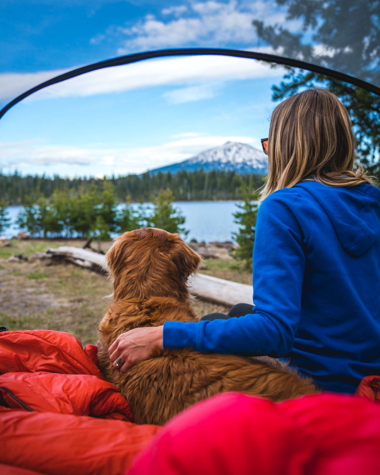 Tent camping dog