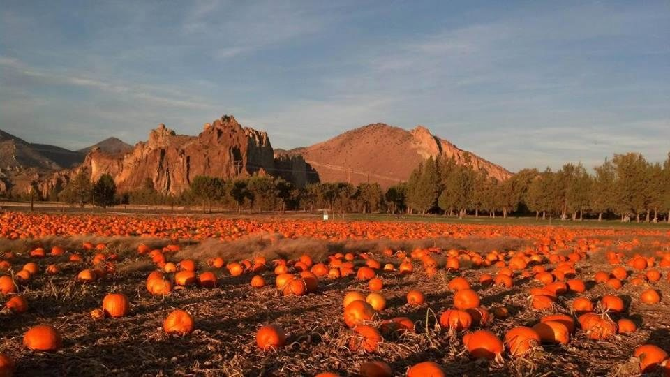 https://www.visitbend.com/wp-content/uploads/2018/09/smith-rock-ranch-u-pick-pumpkins-or_66647.jpg