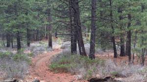 phils-trail-960