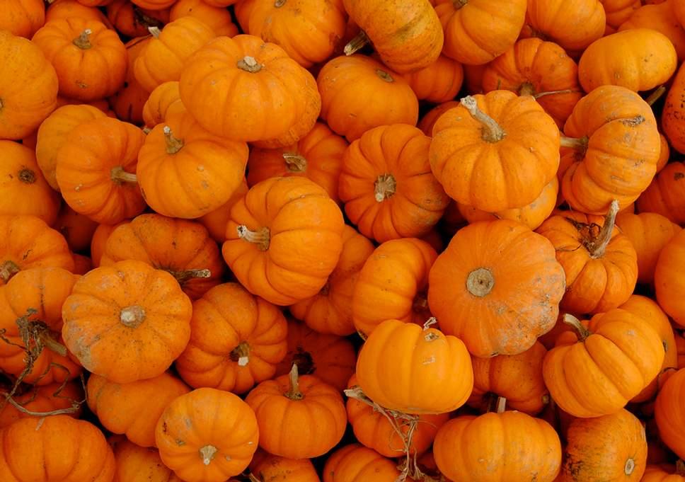 https://www.visitbend.com/wp-content/uploads/2018/10/pumpkins.jpg