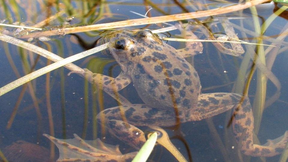 https://www.visitbend.com/wp-content/uploads/2019/02/HDM-Spotted-Frog-960.jpg