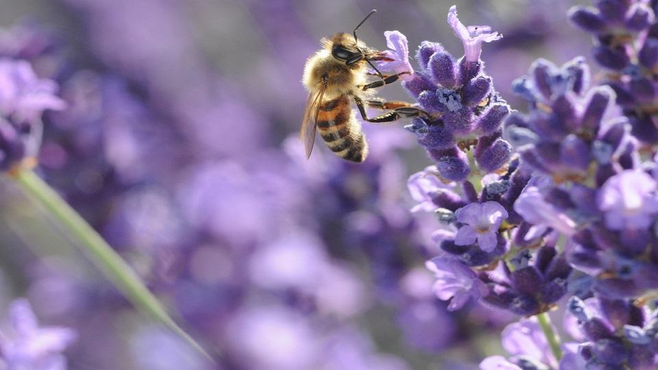 https://www.visitbend.com/wp-content/uploads/2019/08/High-Desert-Museum-Bee-Conservation-960.jpg