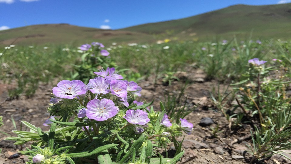 https://www.visitbend.com/wp-content/uploads/2019/09/wildflowers960.jpg