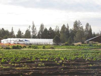 rainshadow-organics-farm-gallery-1