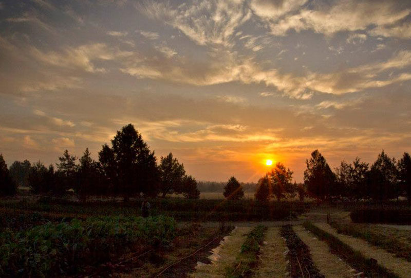 rainshadow-organics-farm-sunset-gallery-2