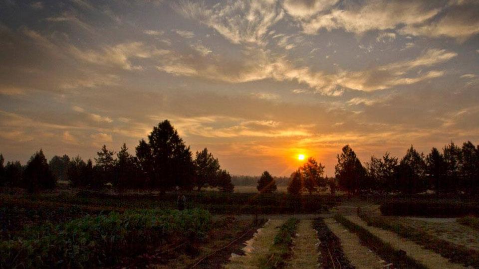 Sunset view of Rainshadow Organics Farm