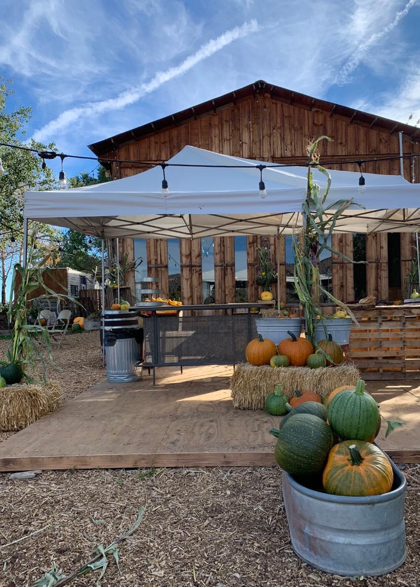 DD Ranch Terrebonne pumpkin